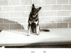 The original guard dog of Hawthorne, a german sheppard named Chico